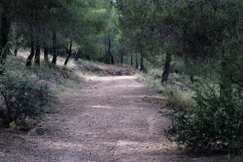 Monteliso - El sendero