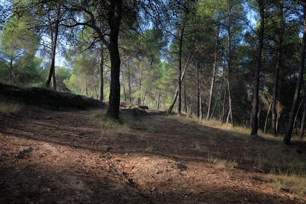 Bajada sendero - el Valle
