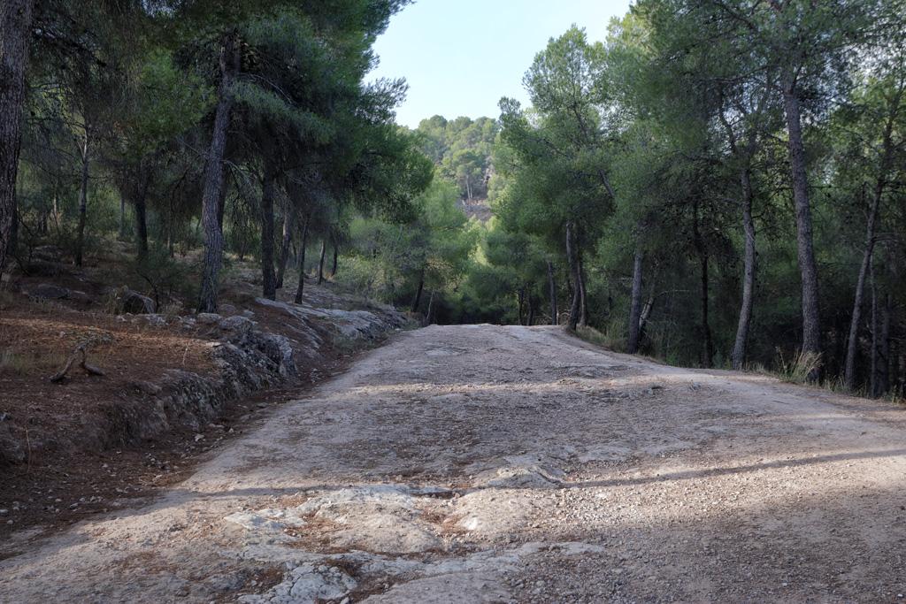 El camino de los pinos - El Valle