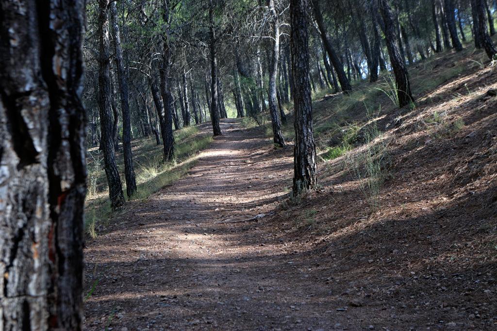 El sendero corto - el Valle