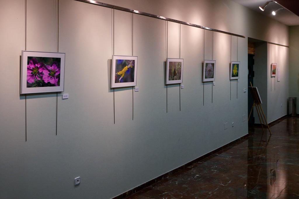 """Exposicion Antonio Moreno Abellán """"Monteliso a la vista"""""""