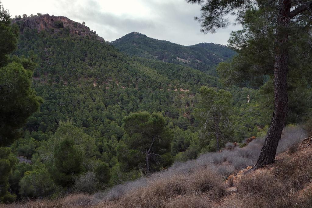Laderas vertientes a la Rambla de El Valle con pino Carrasco en 2021