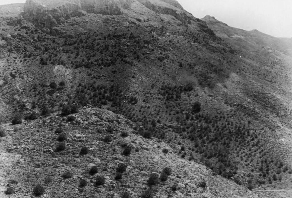 Laderas vertientes a la Rambla de El Valle repobladas con pino Carrasco