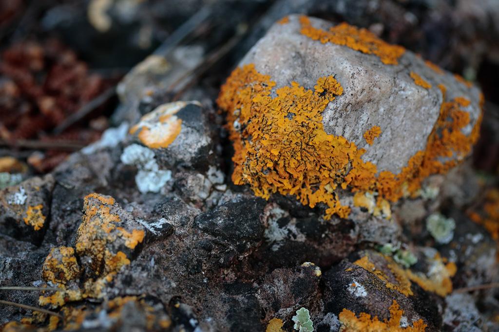 Líquenes son organismos que surgen de la simbiosis entre un hongo y una alga