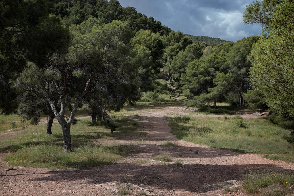 Planada en el entorno natural de Monteliso