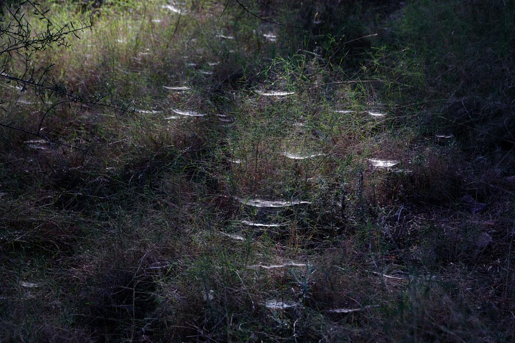 Telarañas en el monte