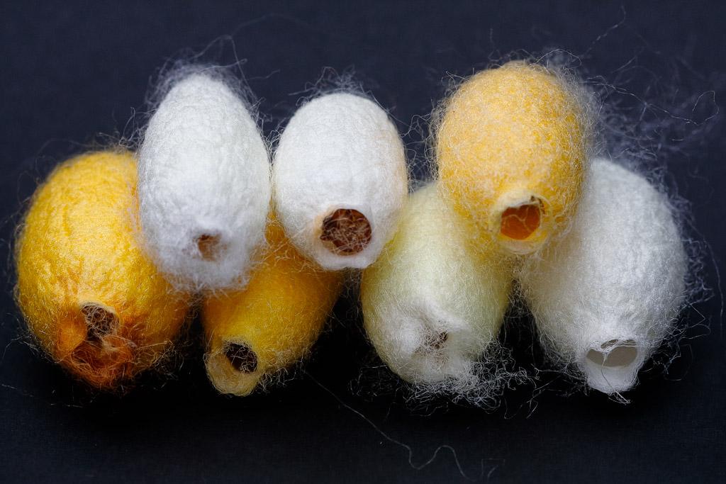 Capullos de gusanos de la seda
